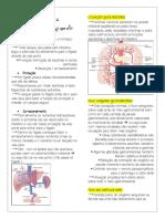 Circulação Esplâncnica e Fígado