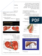 figado e pancreas
