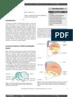 Avian Brains
