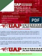 LA ACTIVIDAD GANADERA- FILIAL JULIACA