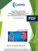 Sistema dijestivo funciones y caracteristicas