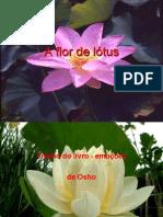 A FLOR DE LOTUS