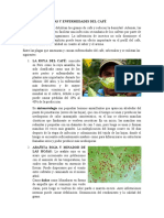 Principales Plagas y Enfermedades Del Café
