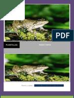 ranas y sapos(revista)