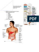 Handouts - Digestive System Sp11