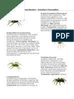 Animais Peçonhentos Aranha e Escorpião