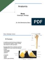 Anatomía-Brazo