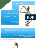 huesos-del-craneo-160218041853