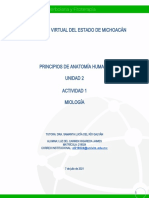 LHigareda_Miología