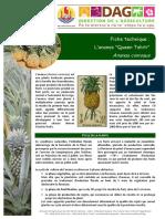 Ananas Comosus Ft Culture PolynesieFrancaise Sdr 2016