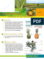 ANANAS Conduite Agroecologique 2017