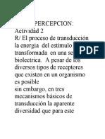 actividad  Paso a paso de las fases del procesamiento perceptual