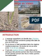 La culture de l'asperge en Valais