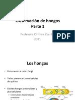 4_Observacion de hongos_1
