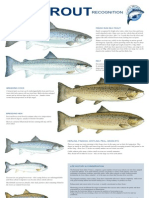 Sea Trout Recognition