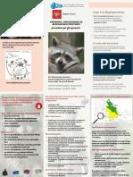Prevenire-linfestazione-da-Baylisascaris-procionis