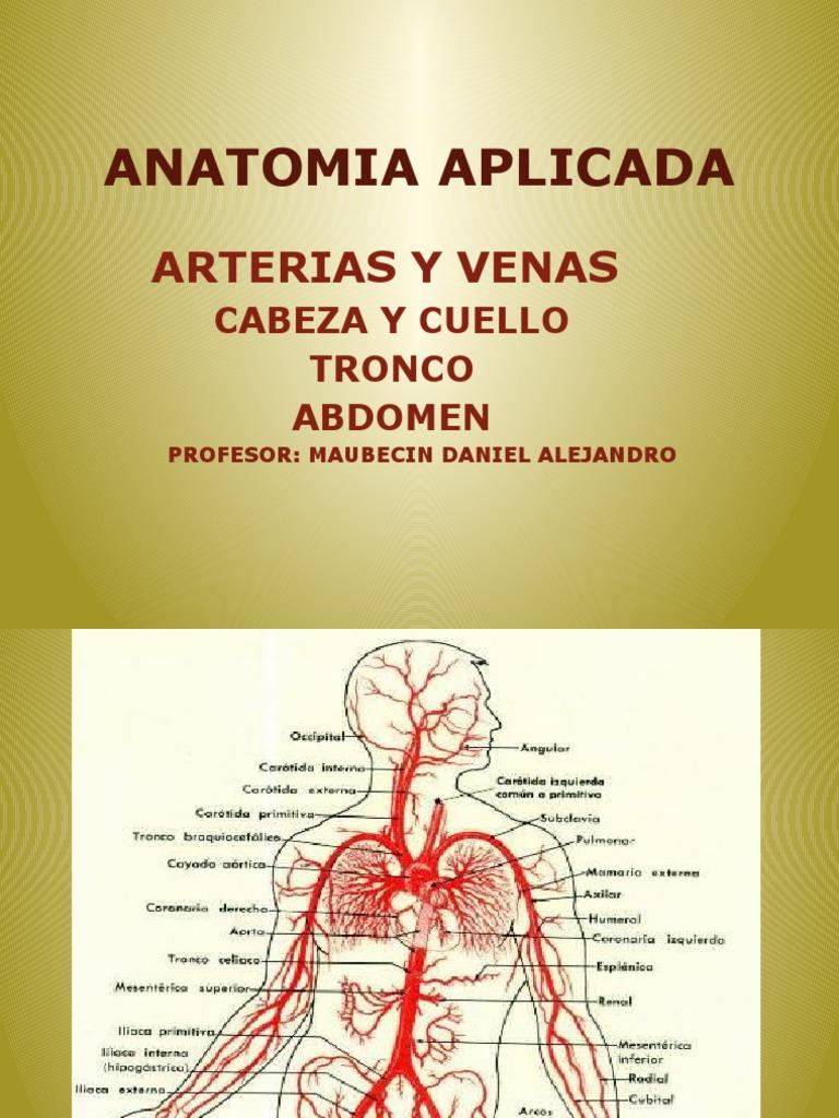 ANATOMIA APLICADA ARTERIAS Y VENAS TRONCO