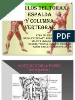 musculos del torax espalda y columna vertebral