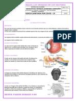 guia 11 Ciencias Naturales 4° 3P los organos de los sentidos
