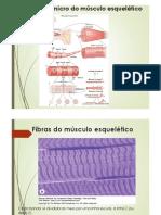 02 - Miologia obj. B1 e B2