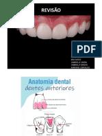 Anatomia dentes anteriores