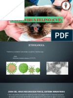 Calicivirus Felino (Cvf)