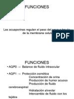 ACUAPORINAS funciones + transporte