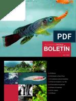 Boletin 01