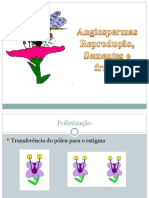 Angiospermas_2_2008