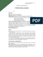 Colletotrichum acutatum