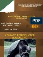APARATO_REPRODUCTOR_MASCULINO_V_30-06-08[1]
