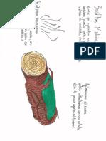 Briofitas medicinais