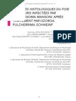 Analyses histologiques du foie de souris porteuses de schistosomiase
