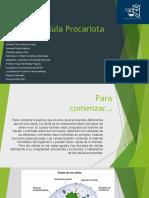 Seminario_2_Célula_Procariota