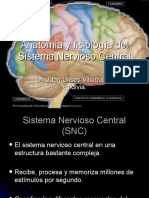 sistema_nervioso_central