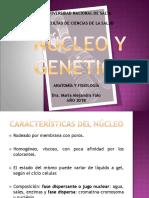 3 - GENÉTICA Y DIVISIÓN CELULAR