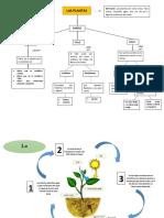 mapa conceptual ciclico