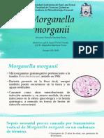 Antiobiograma Morganella morganii  por Daniela Sánchez