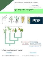 Morfologia de Plantas Forrageiras 71p. SLIDES