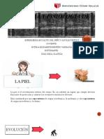 ANATOMÍA-Y-FISIOLOGIA-DE-LA-PIEL