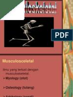 Anatomi Sistem Muskulo Skeletal
