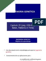 CV 12. Ingenieria genetica (4)2011