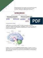 O Sistema Nervoso texto com ventriculos