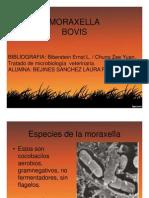 MORAXELLA_BOVIS.e濴ᇕ䲨