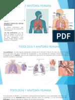 Sistema respiratorio y cardiovascular