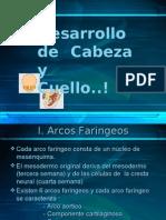 DESARROLLO DE CABEZA y CUELLO