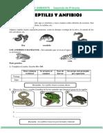 Los Reptiles y Anfibios Para Segundo de Primaria