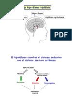 Eje hipotalamo-hipofisis