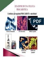 02.Cellula procariotica cellula eucariotica e virus