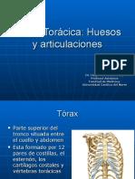 3[1]. Pared Toracica 1 (Huesos y Articulaciones) [10.04.08]